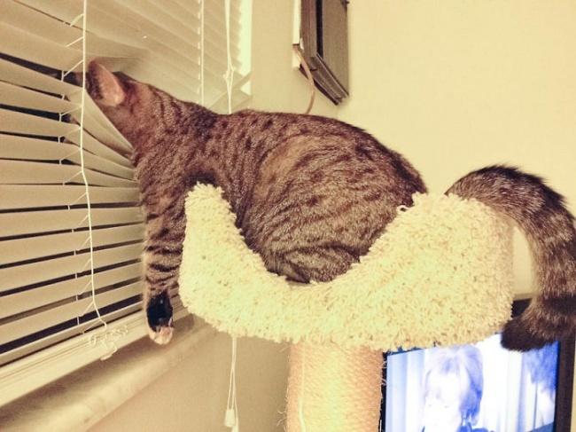 13признаков того, что ваш кот без ума отвас