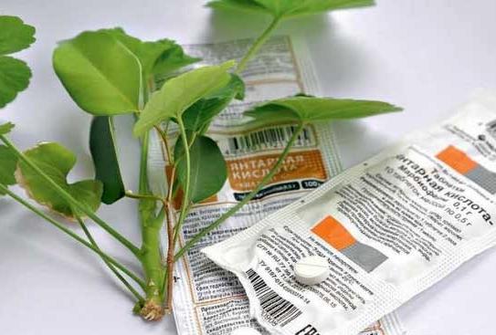 Янтарная кислота для хвойных растений