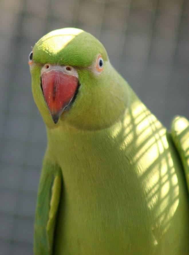 фото смешных попугаев ставить