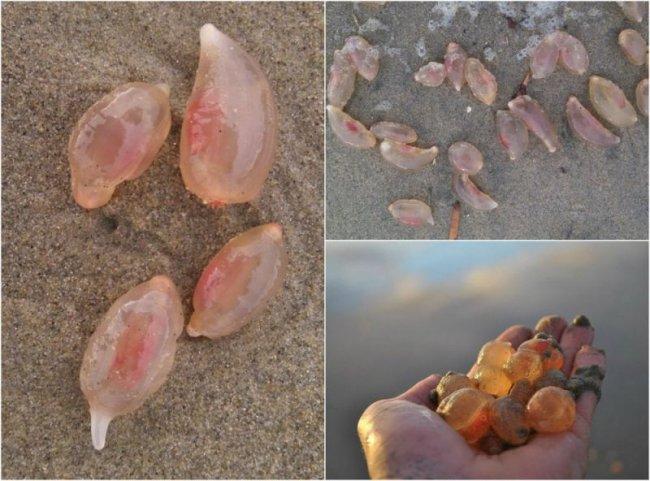 Неведомые существа выползли на песчаный пляж в Калифорнии