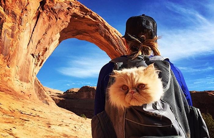 Забавные коты, которые путешествуют по миру со своими хозяевами.