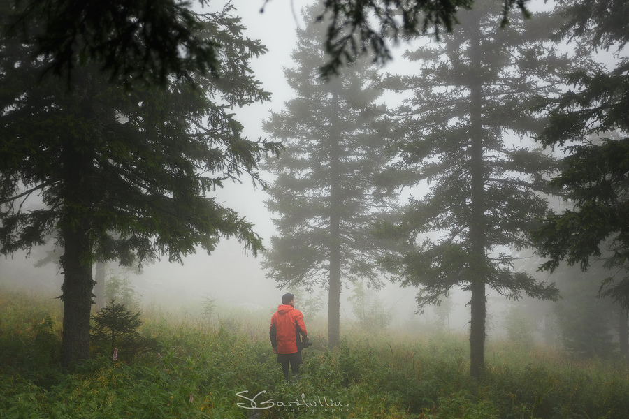 В облачном лесу Таганая