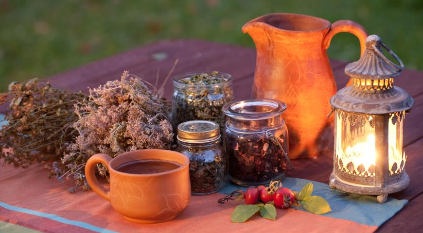 Шиповник для нашего здоровья: самые витаминные виды и полезные рецепты здоровье,полезные советы,шиповник