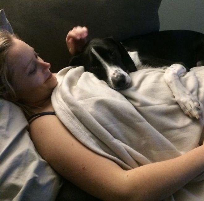 Эта собака в курсе, что ее хозяйка беременна. животные, собаки, это интересно