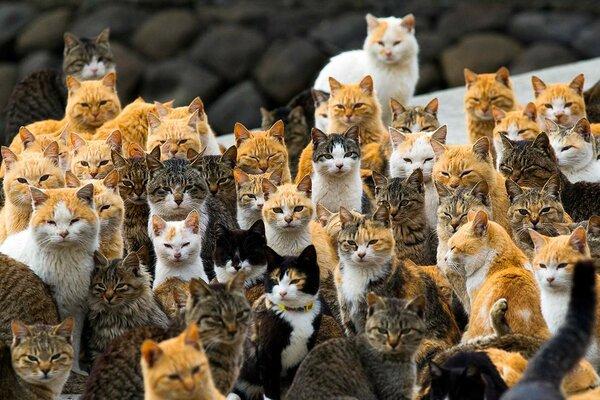 Фраджост - остров кошек.