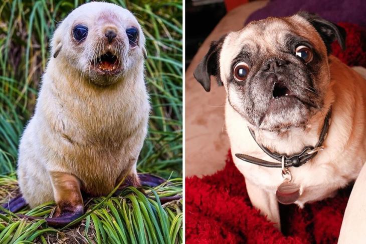 20 доказательств того, что тюлени это собаки подводного мира собаки, имеют, кошки, тюленями, подотряду, домашними, почему, параллельному, кошкообразных, Feliformia, генетическая, связь, прекрасно, объясняет, тюленей, время, часто, называют, щенками, океана