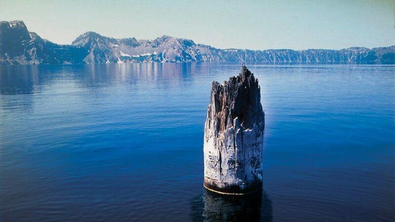 Уже не совсем дерево, но оно им когда-то было - Old Man of the Lake бывает же такое, деревья, жизнь, интересное, растения, факты