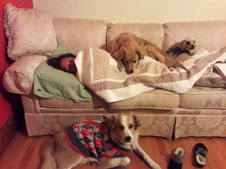 25собак, которые покажут вам, что такое настоящая любовь