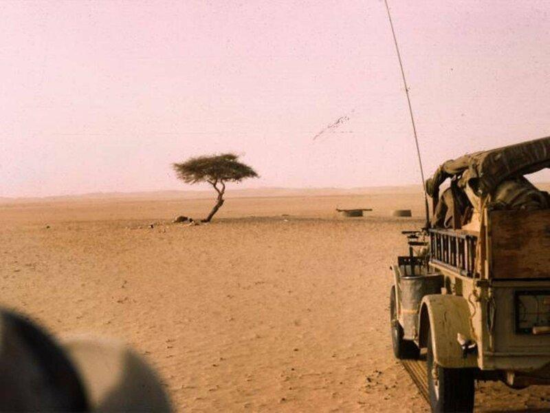 Дерево Тенере  - это одинокая акация, которая росла в пустыне Сахара бывает же такое, деревья, жизнь, интересное, растения, факты