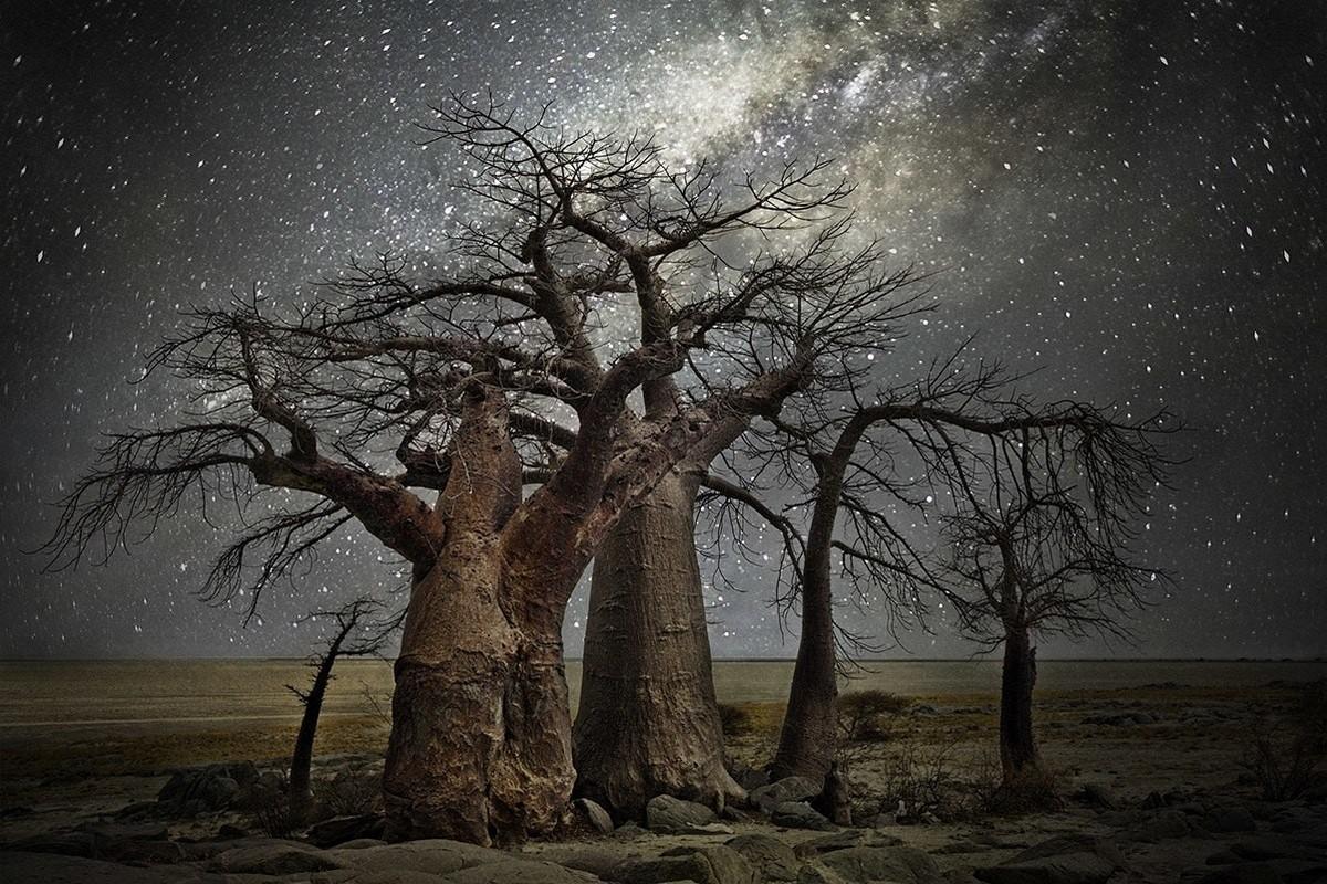 Бет Мун снимает деревья на фоне звёздного неба звёзды,ночь,тревел-фото