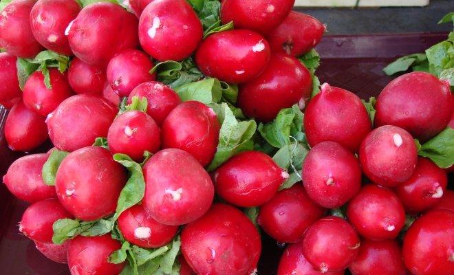 Редис на грядке или на окошке - сорта и условия для быстрого урожая