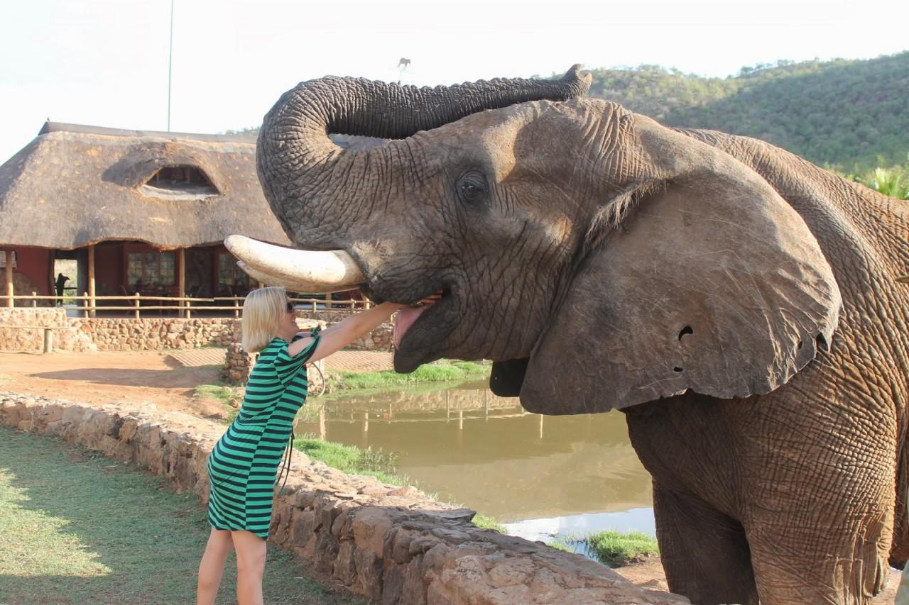 Свадьбу букет, картинка прикол слоник