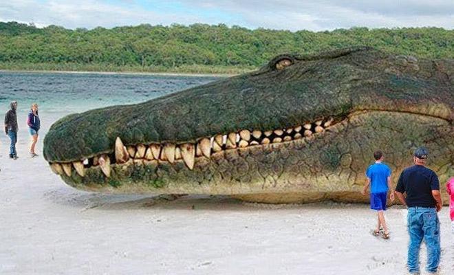8 миллионов лет назад в джунглях Амазонии жил самый крупный хищник в истории. Длина крокодила была 20 метров