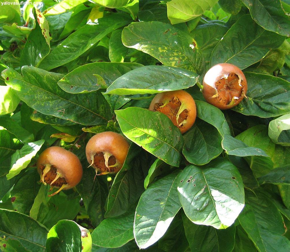 6 диковинных растений для вашего сада