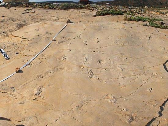 Удивительная находка палеонтологов