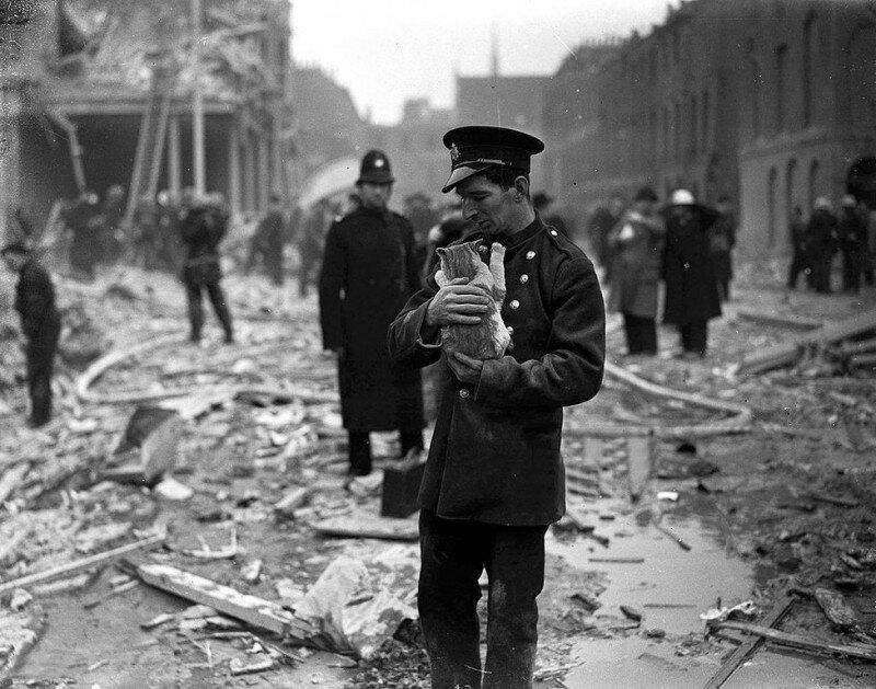 Спасатель с кошкой среди разрушений и обломков, вызванных ФАУ на Джадд-стрит в Лондоне, 13 февраля 1945 года. история, ретро, фото