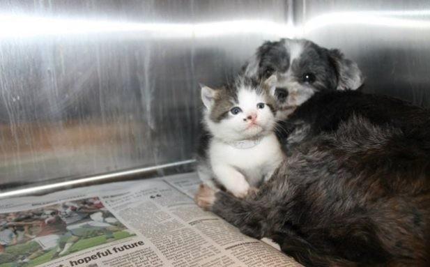 Собака рисковала жизнью, чтобы спасти крошечного котенка. а потом выкормила его, как щенка