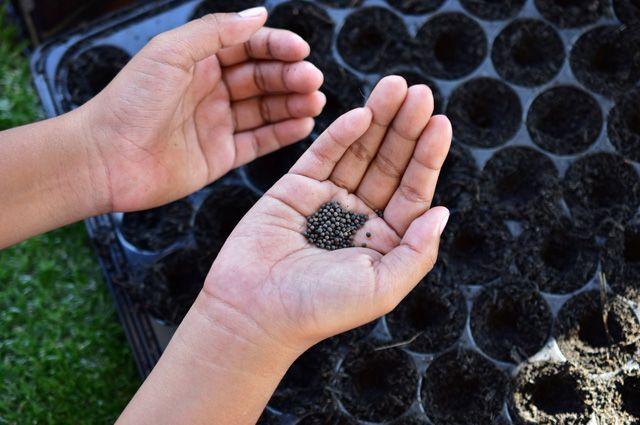 Процедуры для семян. Готовим посевной материал правильно