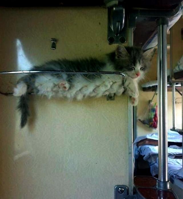Полочка для вещей и котят! | Фото: Twizz.