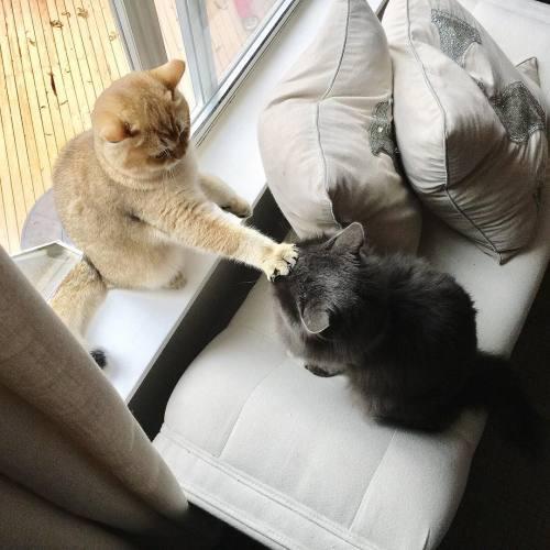 6. Сиди, холоп! животные, кошка, милота, прикол, собака, фото
