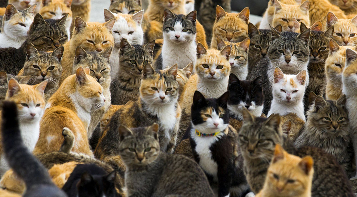 Почему Австралия решила уничтожить 2 миллиона кошек?
