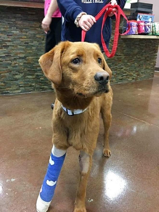 Собака сорвалась с поводка и потерялась. А между тем, ей была нужна помощь после встречи с койотом истории из жизни