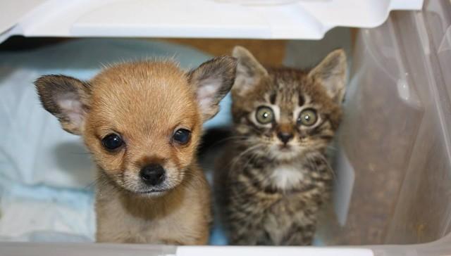 Щенок выжил благодаря поддержке маленького котенка