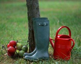 Полив плодовых деревьев осенью - Справочник дачника