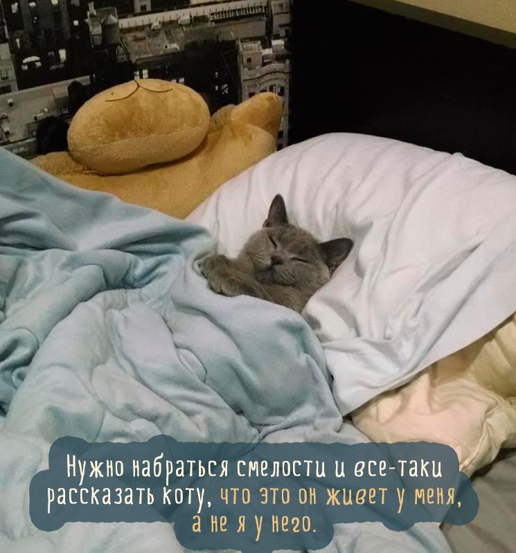 Самые красивые породы кошек, тОП - 21 cats