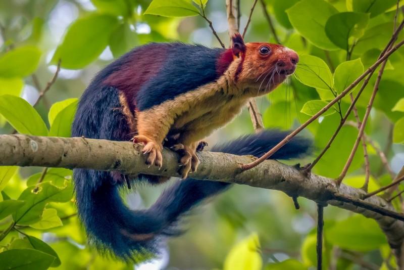 Уникальные явления, существующие на Земле в одном-единственном месте животные,природа