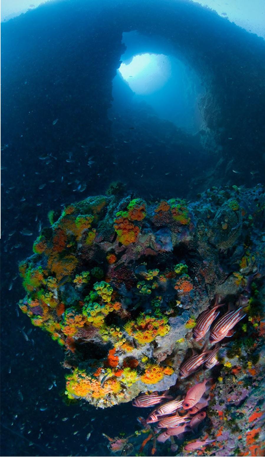 Mundo subaquático 35