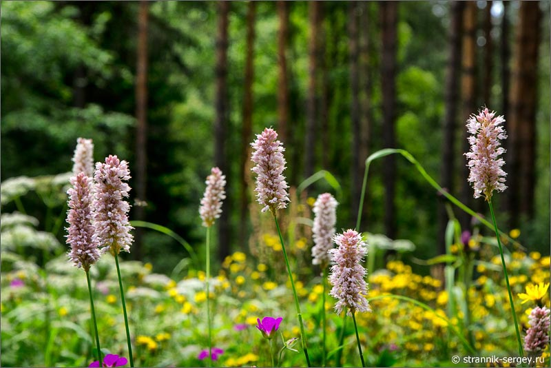 Картинка роскошный букет цветов
