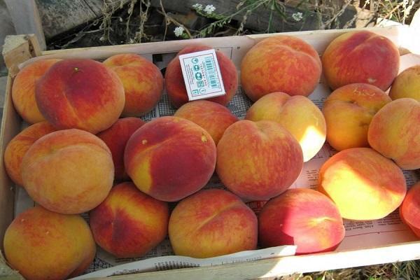 ящик плодов