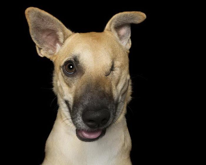 Красота собак с физическими недостатками