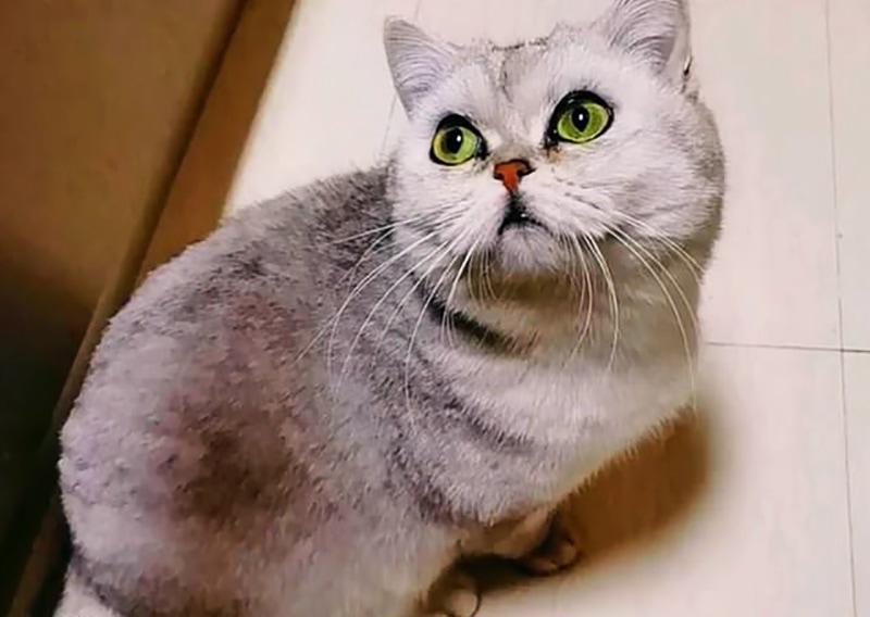 Кошка из Уханя 40 дней жила одна, пока хозяева лечились от COVID-19. Она выжила, да ещё и родила себе компанию