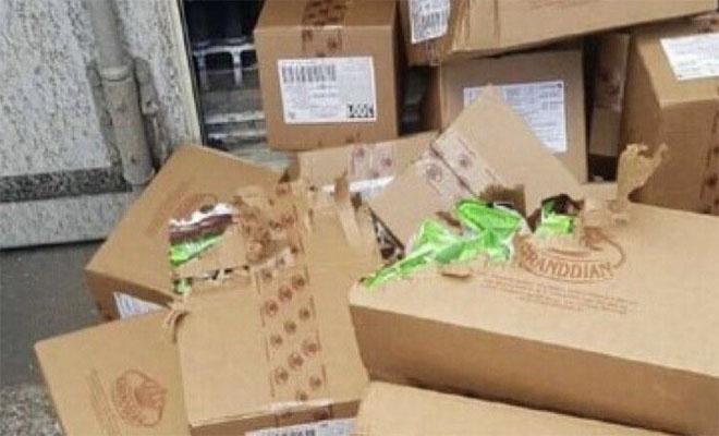 Одесская кошка пробралась в грузовой контейнер и приехала в Израиль: три недели питалась конфетами Культура