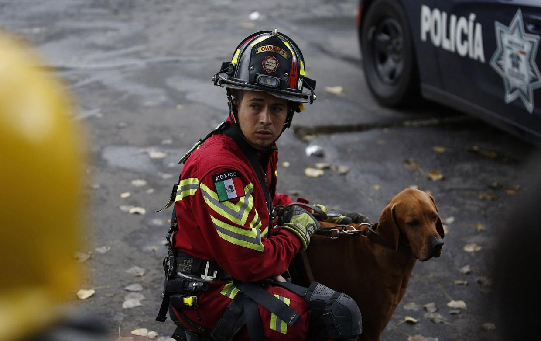 Как трудятся обученные доставать людей из-под завалов собаки