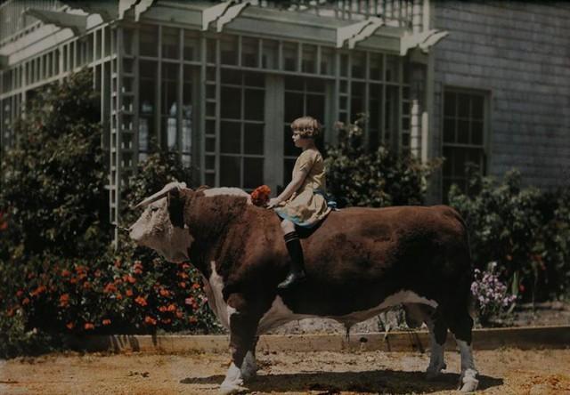 Девочка верхом на херефордском быке возле Плезантона, штат Калифорния, 1926 national geographic, неопубликованное, фото