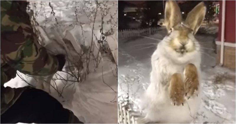 Житель Астаны нашел застрявшего в заборе и замерзшего насмерть зайца