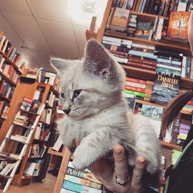 Котенка держат