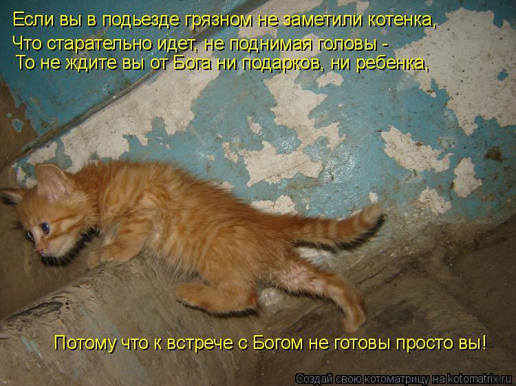 Против барселоны, картинки с надписью котенок ты мне нужен