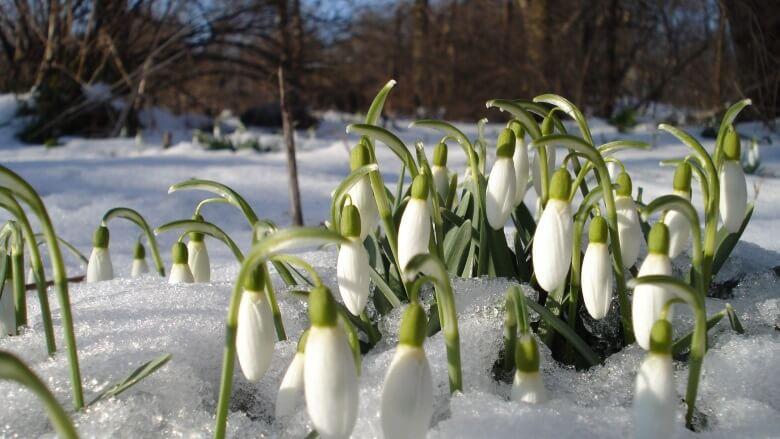День весеннего равноденствия - это астрономическое начало весны