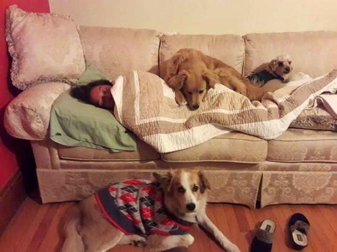 А тут целая армия четвероногих терапевтов. животные, собаки, это интересно