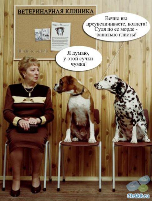 Ветеринары картинки приколы