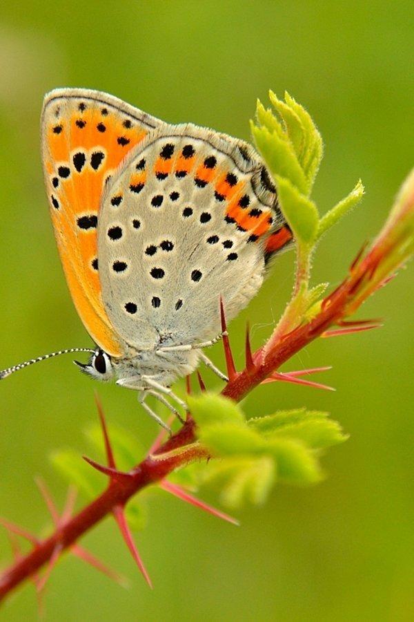 Красивые и веселые Букашки букашки, красивые, насекомые, природа