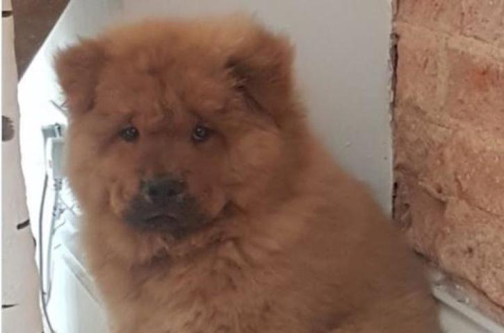 Укусивший полицейского щенок вернулся домой после «тюремного заключения»