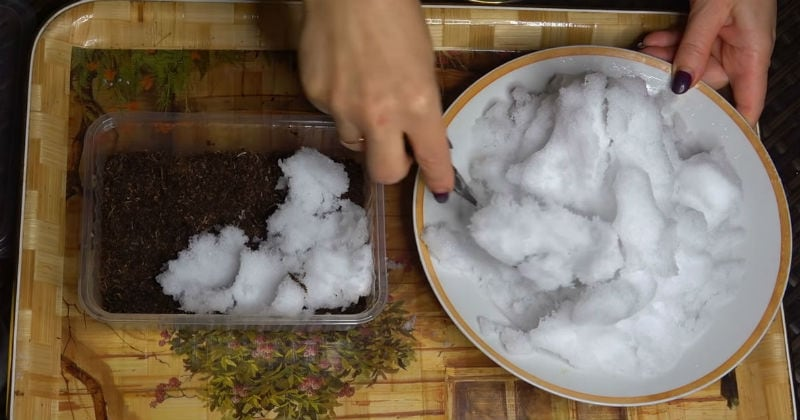 Необычный способ посева петунии на снег! Всхожесть семян непременно порадует