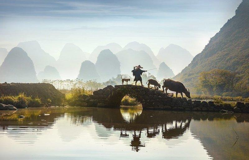Фермер с водяным буйволом. Эти животные до сих пор используются в сельском хозяйстве для работы на рисовых полях виды, города, китай, красота, необыкновенно, пейзажи, удивительно, фото