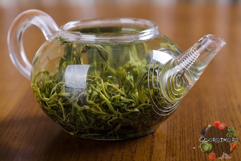 Зеленый чай, польза и вред – пейте целебный напиток разумно!