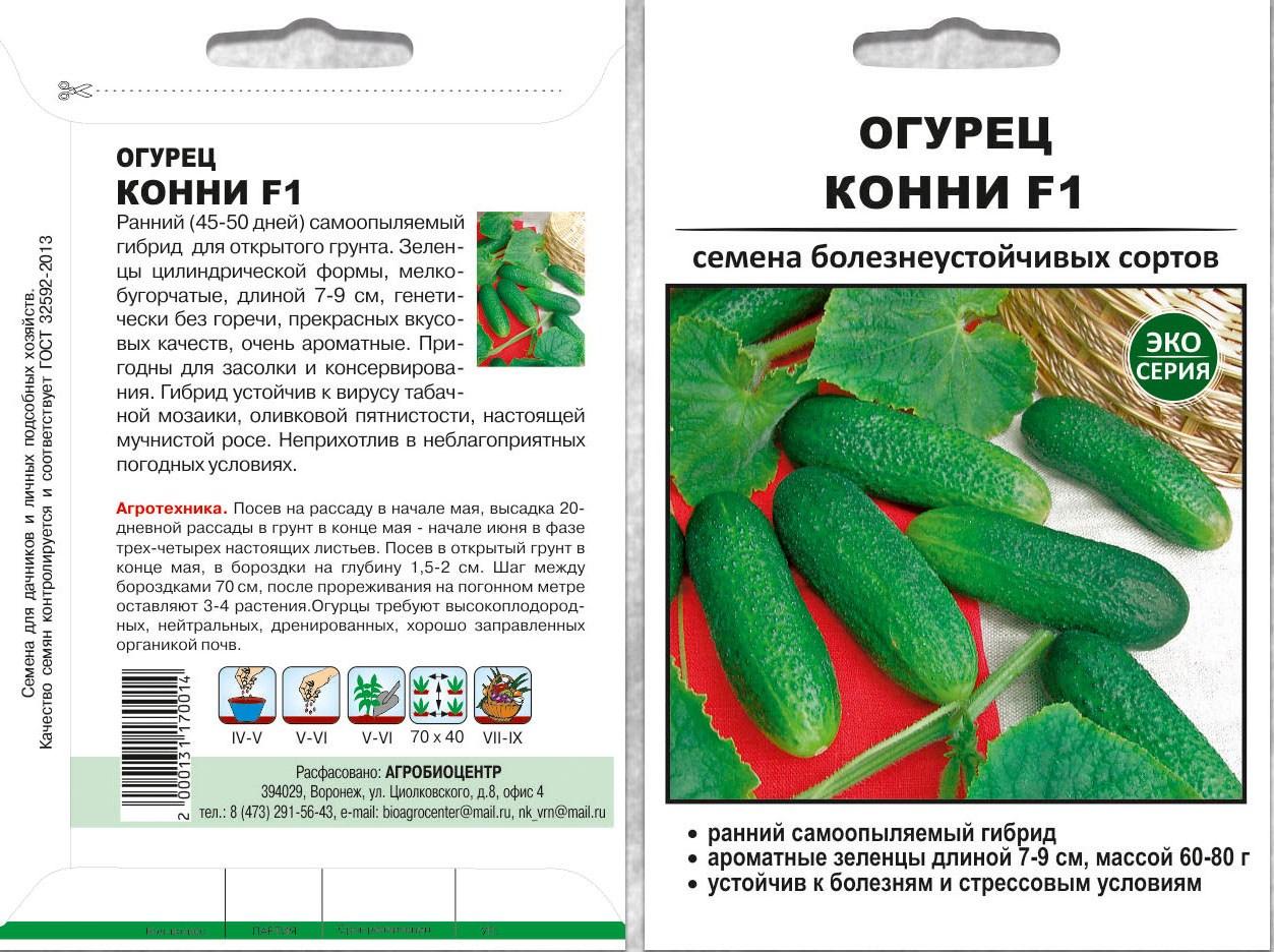 Домашние огурцы — выращивание зимой